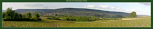 Vignes du Champagne Tarlant à Oeuilly