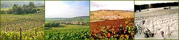 Four seasons in Champagne